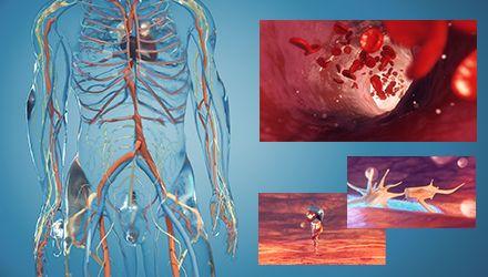 Film 3D – Hémostase